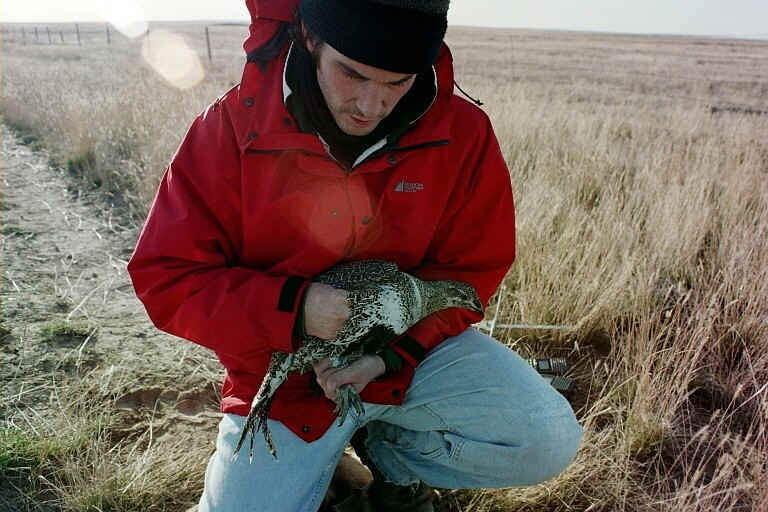 Cam and Female Sage Grouse