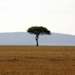 East African Savanna with acacia tree