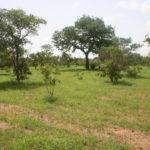West African Savanna