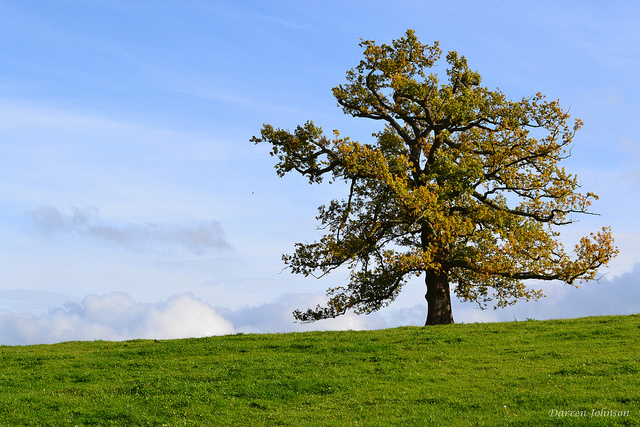 Summer tree on hill