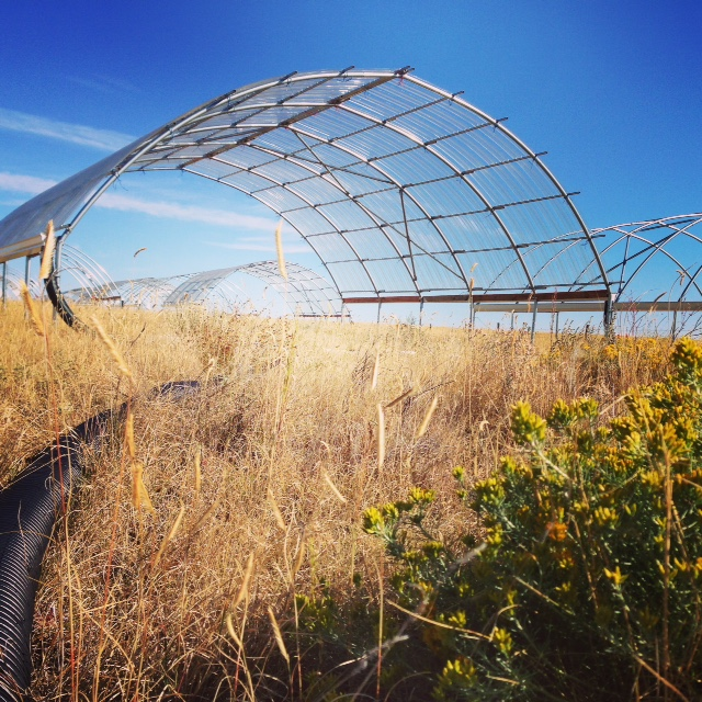 A view of a drought experiment in Northern Colorado's Central Plains Experimental Range (CPER) Photo Credit: Xoco Shinbrot