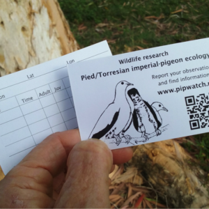 QR codes for pigeon ecology research
