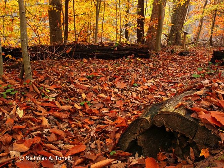 Dense pack of fallen leaves