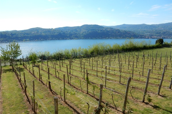Lake Maggoire with vineyards in foreground