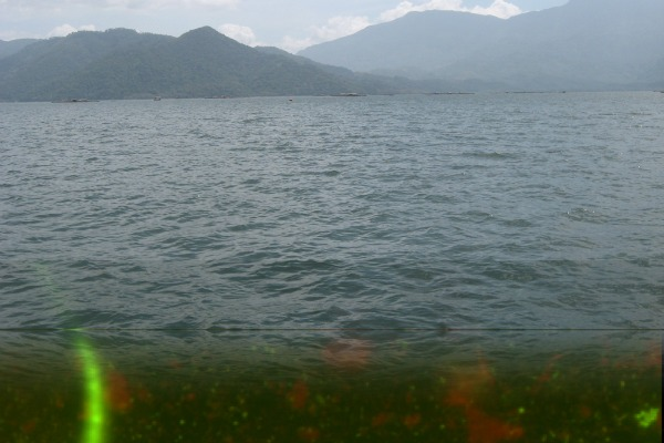 Photo of underwater plants with lake and mountains in background