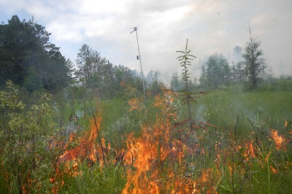 Fire in green meadow