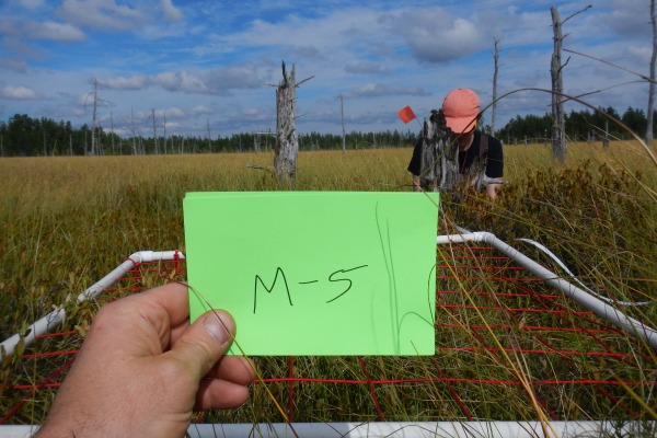 Documenting test plot area M-5