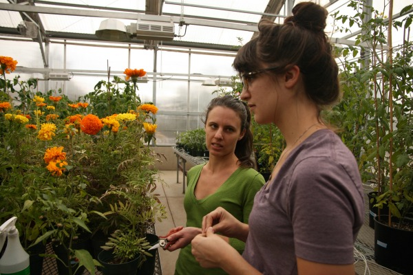 Students tending test flowers in greenhouse
