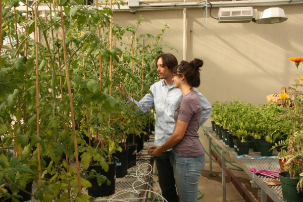 Researchers discuss tomato plant growth in a greenhouse