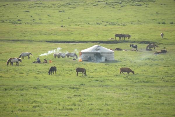 Rangeland in Mongolia.