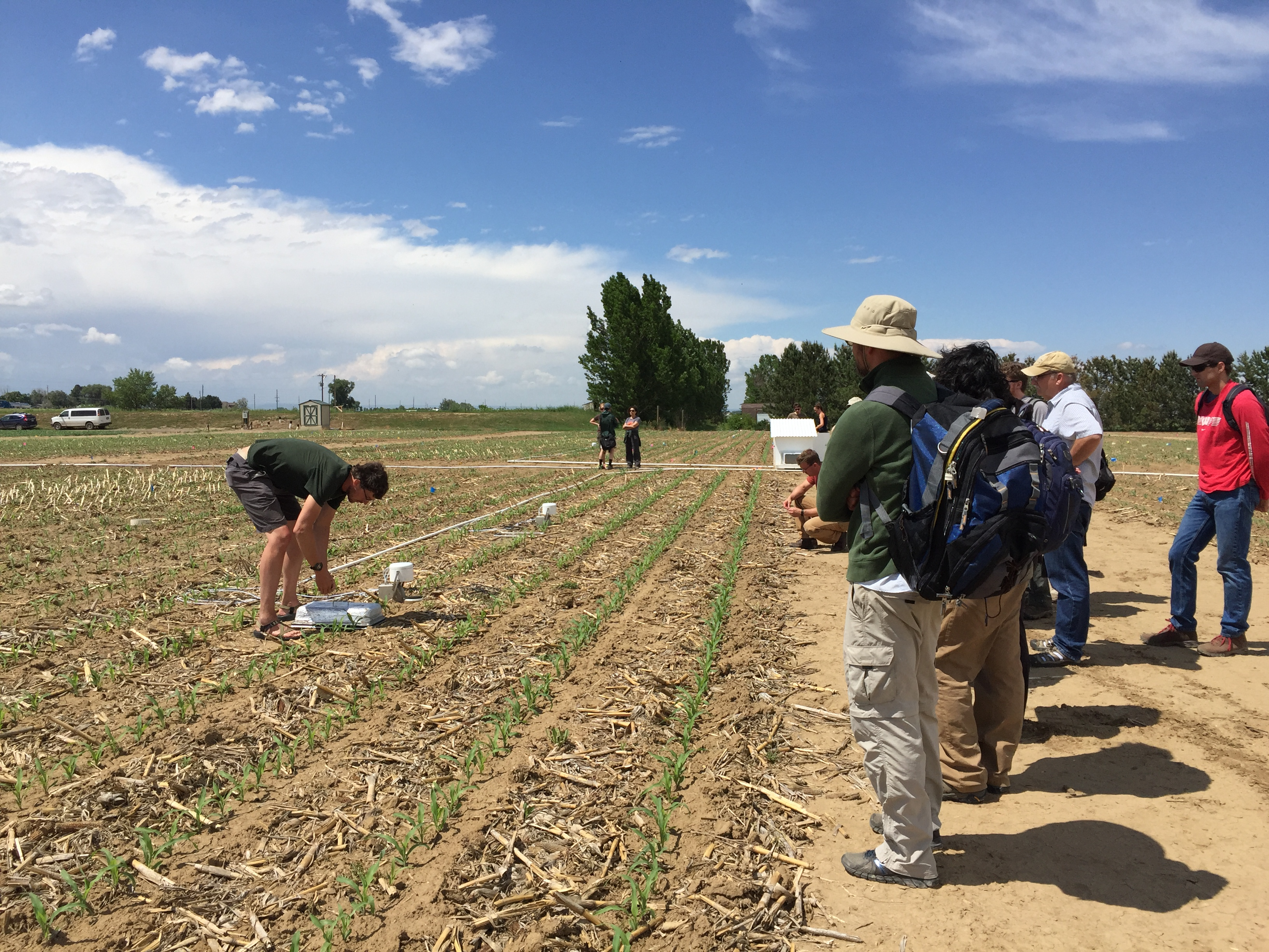 Students talking samples in a young corn field