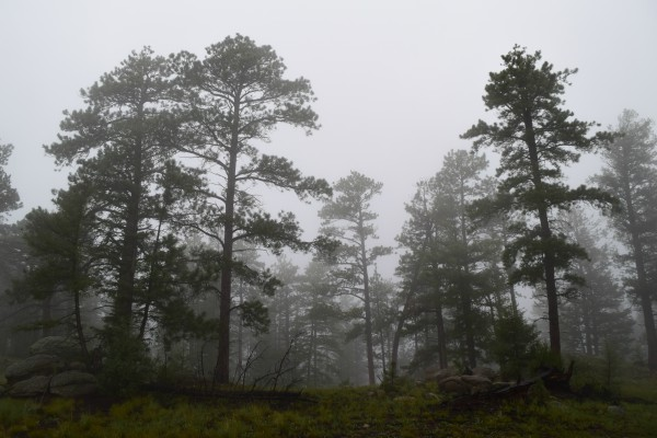Fog in trees on mountainside.