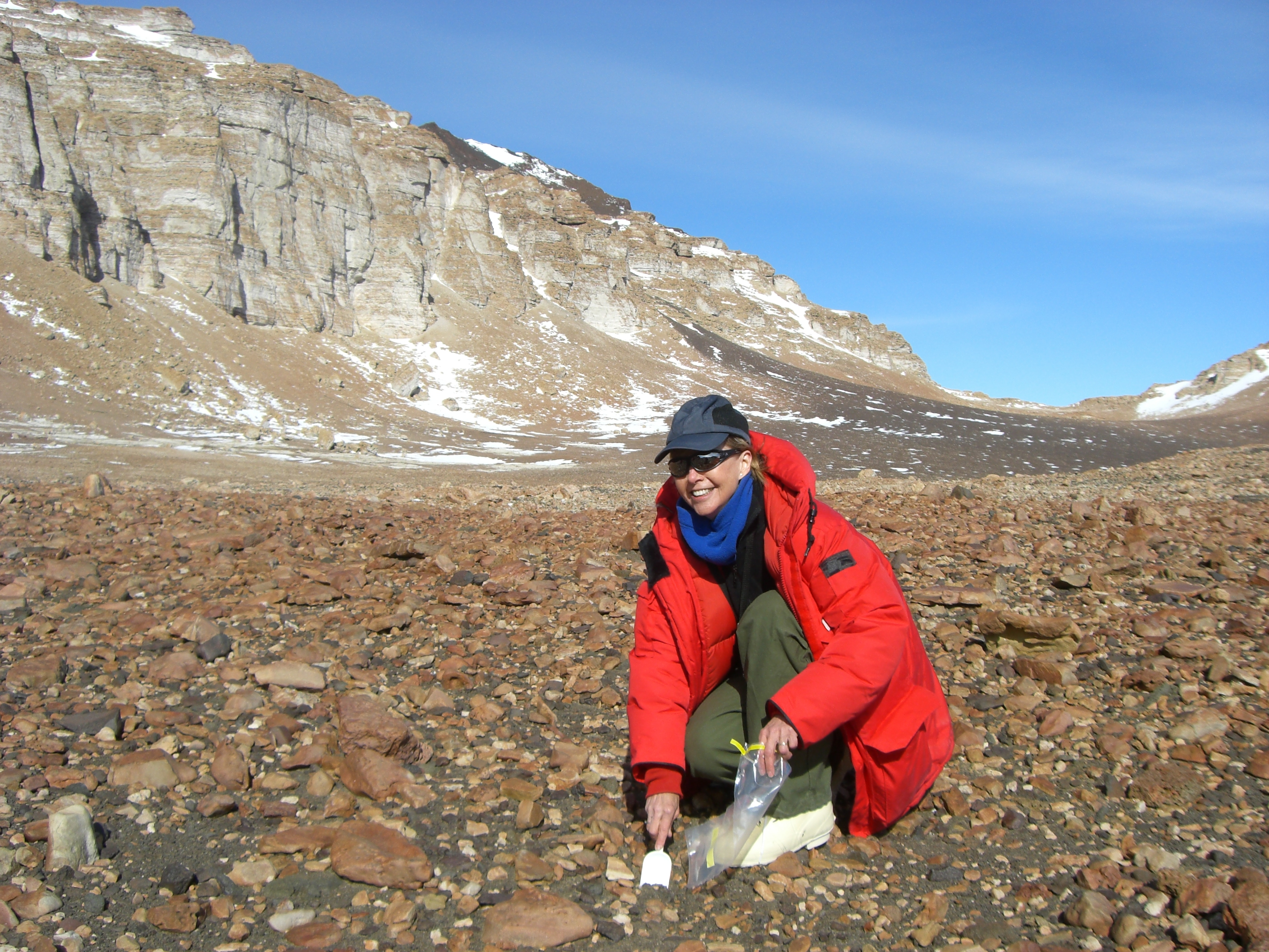 Diana Wall digging for nematodes in Antarctica