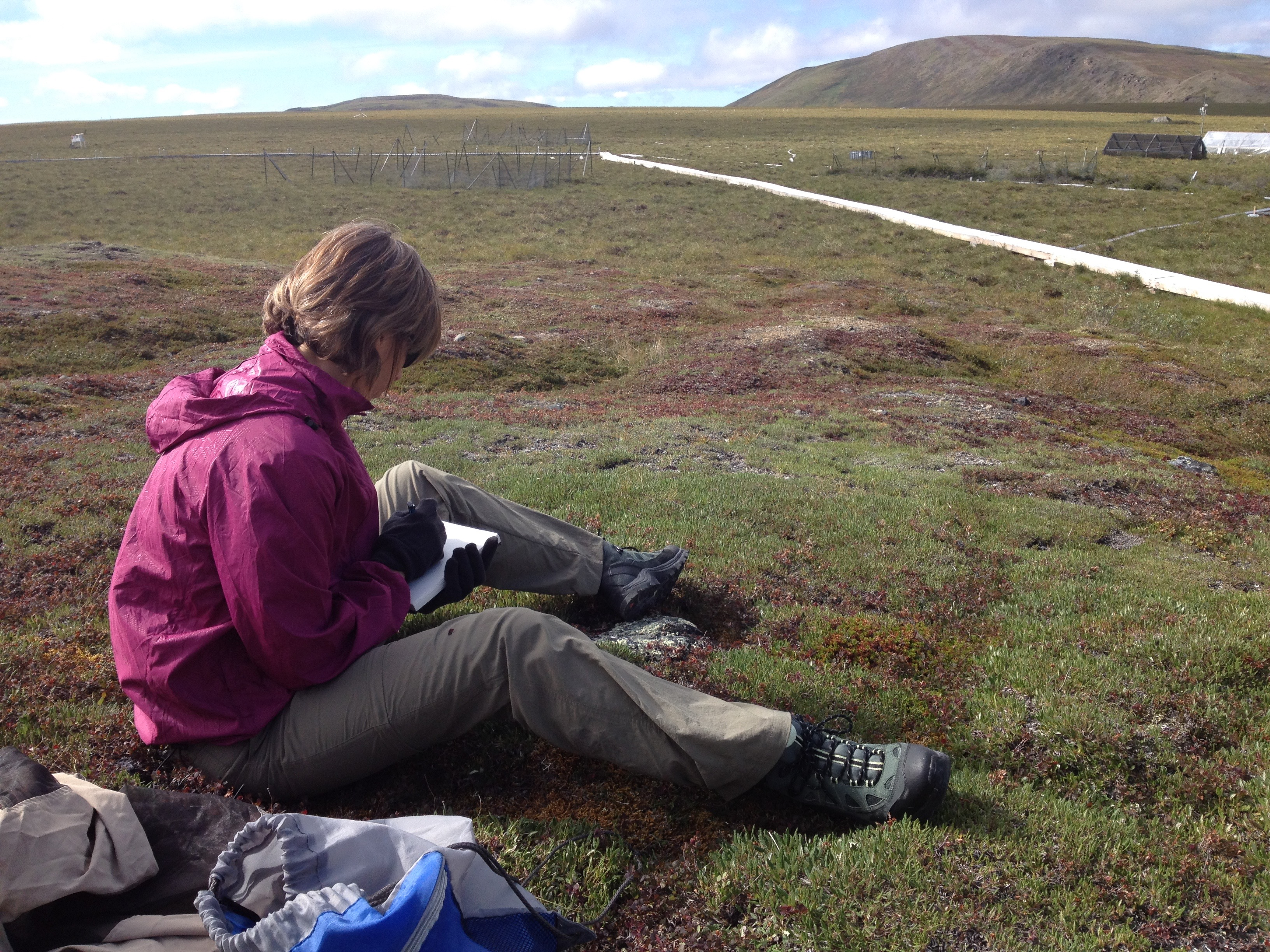 Researcher taking note about tundra plants