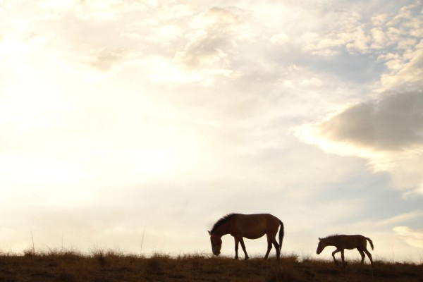 Wild horse silhouette with clouds