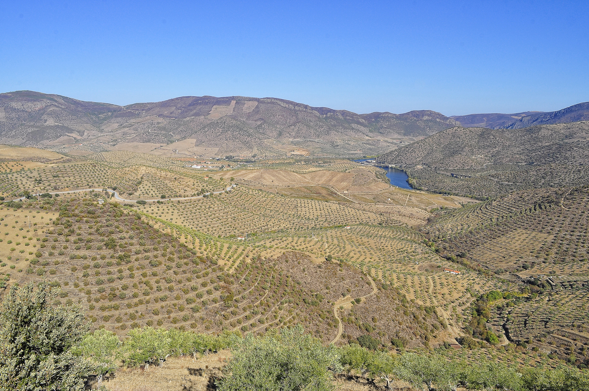 Tree farms on the border of Spain and Portugal.