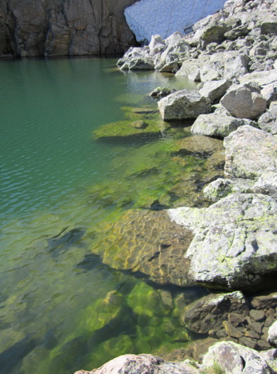Benthic algal bloom along shores of Sky Pond