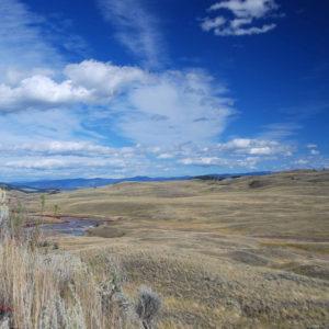 Landscape photo of a grassland ecosystem