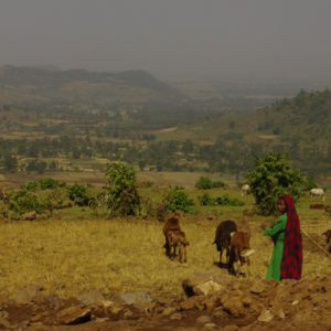 Woman working in a field in Ethiopian Highlands