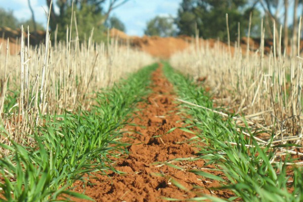 Retaining Stubble in No Till farming