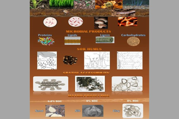 Graphic of different soil make-ups.