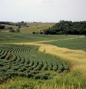 Crops on a hillside.