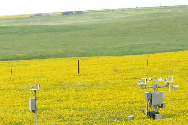 UVB monitoring in field of flowers