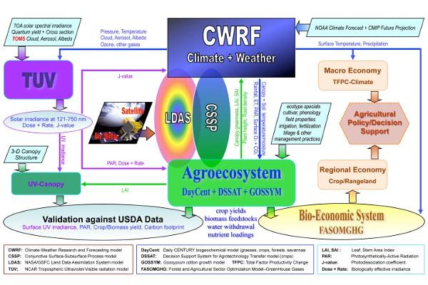 CWRF Diagram