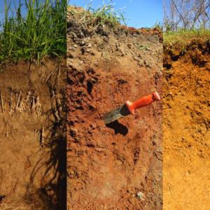 Soil profiles from Arkansas