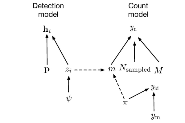 Detection model image