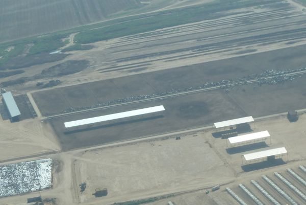 Image of large feedlot