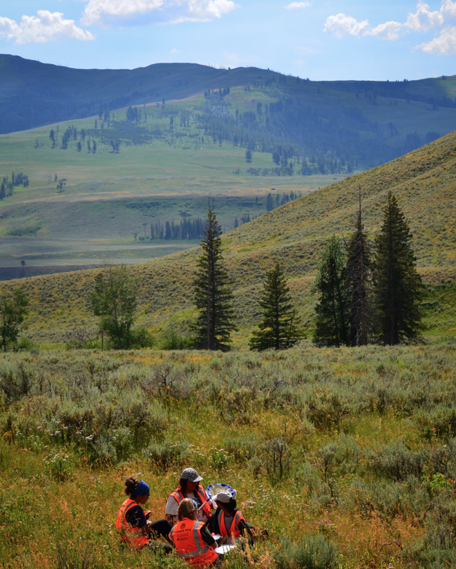 Students collecting insects in Yellowstone National Park