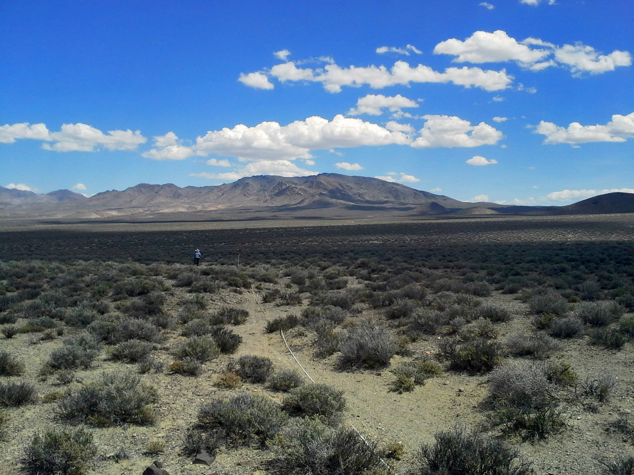 Nevada salt desert scrub