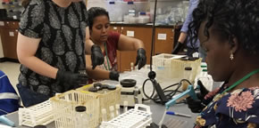 Lab work on soil samples