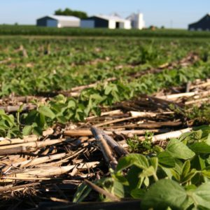 Soybeans emerge through a mat of diverse cover crop plant residues, reducing evaporation, lowering soil temperatures and protecting soil from erosion