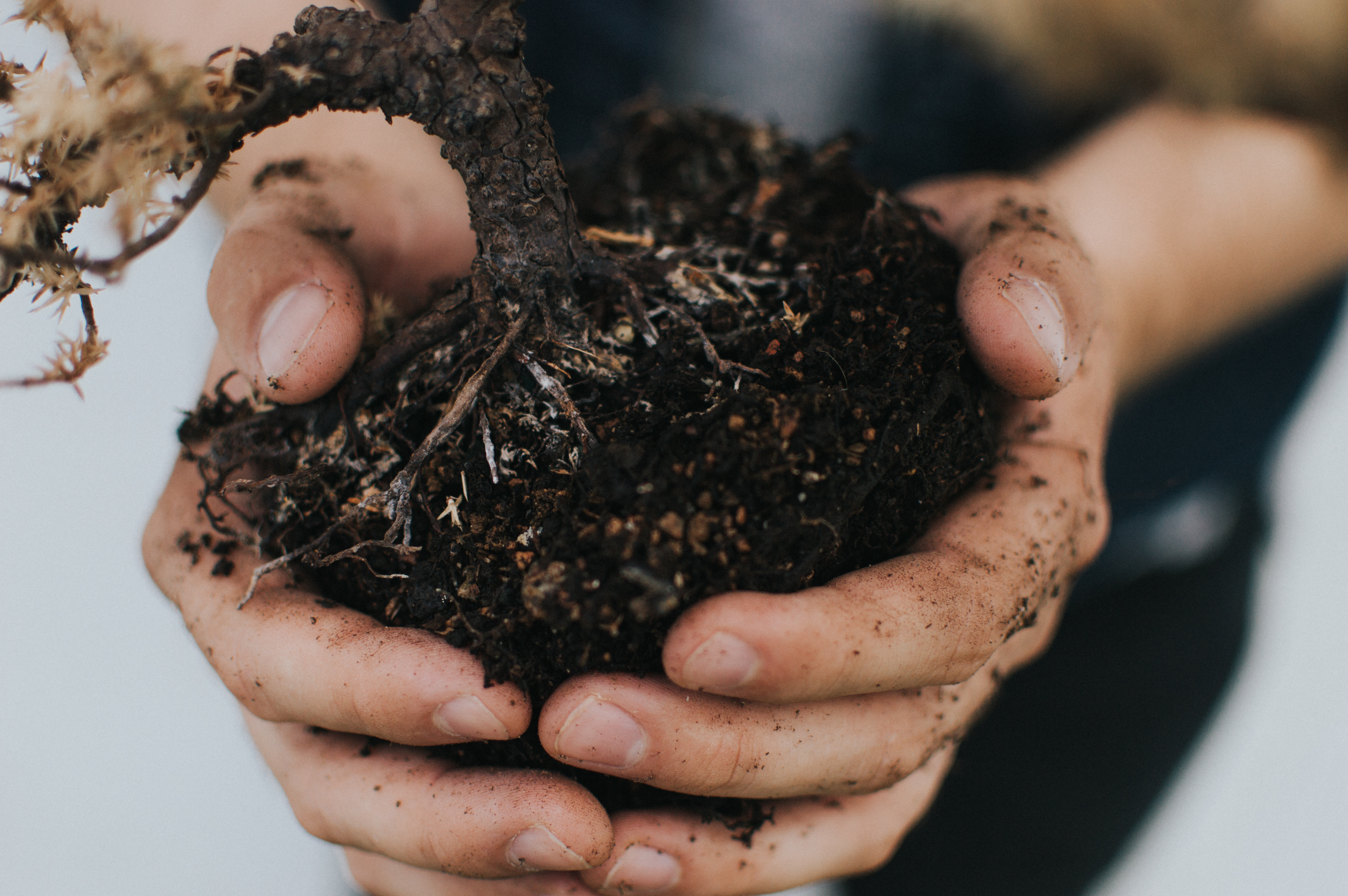 a person holding a handful of soil bound in plant roots