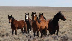 a team of wild horses