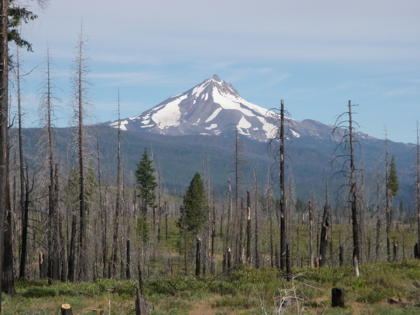 mountain with burnt forest